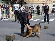Zadržení pachatele a další ukázky. Policisté i hasiči se předvedli lidem