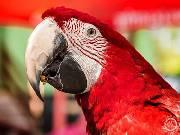 Ztracená papouščí slečna přistála u Kauflandu. Chytili ji po pěti dnech
